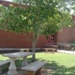 Picnic table under a tree outside the backdoor of the library.