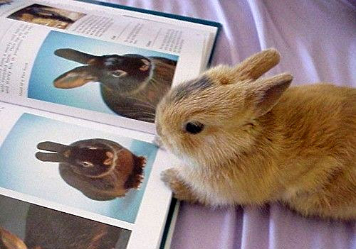 Bunny reading a book about bunnies.